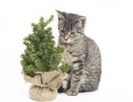 imagen Plantas peligrosas para gatos