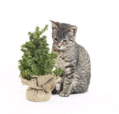 Plantas peligrosas para los gatos