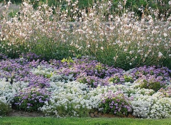 Propuestas para macizos de flores 1