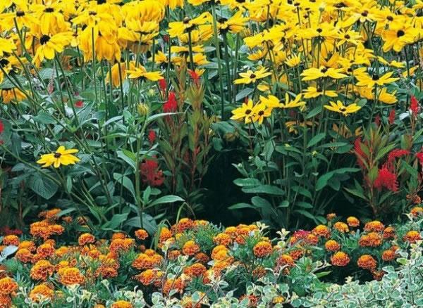Propuestas para macizos de flores 3
