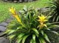 imagen Conoce las plantas más resistentes