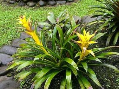 Conoce las plantas m s resistentes - Plantas perennes exterior ...