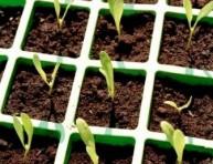 imagen Fabrica tus propios semilleros