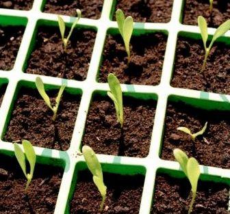Fabrica semilleros