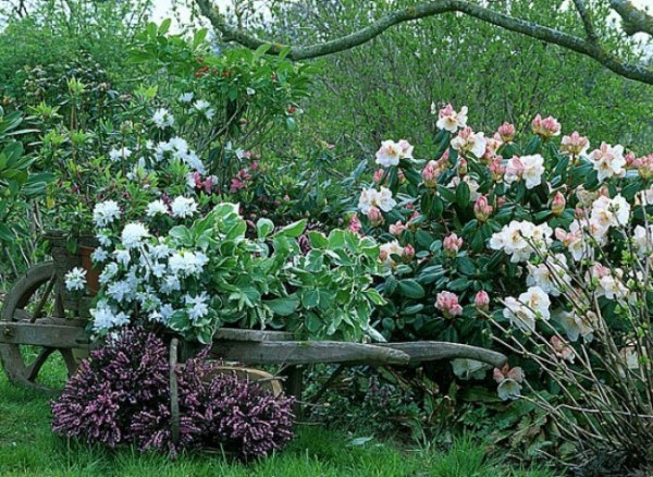 arbustos y plantas para borduras sin mantenimiento