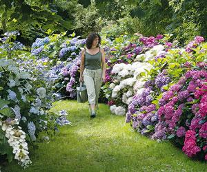 Arbustos y plantas para borduras sin mantenimiento for Plantes et arbustes vivaces