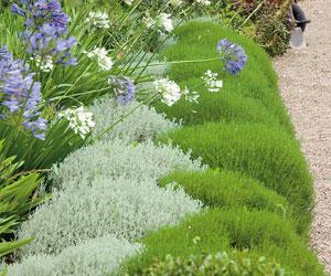 Arbustos y plantas para borduras sin mantenimiento for Arbustos para exterior