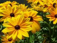 imagen Cinco especies para un jardín de bajo mantenimiento