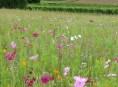 imagen Cómo crear un prado florido