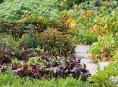 imagen Consejos para un huerto ecológico