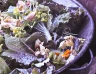 imagen Flores, del jardín al plato