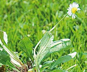 Malas hierbas 2