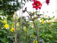 imagen Tutores y soportes para plantas de flor