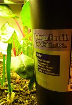 Uso del agua oxigenada en el jardín 1