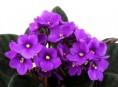 imagen Cinco plantas para regalar a mamá