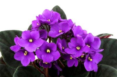 Cinco plantas para regalar a mama3