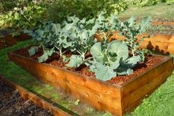 Ahorra esfuerzos en el jardín 4