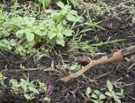 imagen La falsa siembra o cómo engañar a las malas hierbas