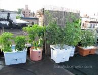 imagen Consejos para el cultivo de un huerto en la azotea