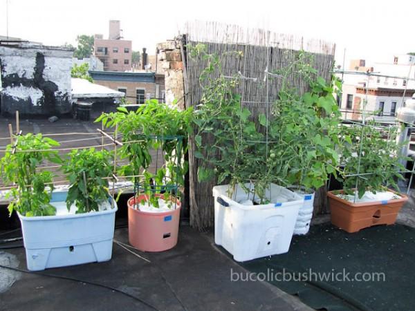cultivo de un huerto en la azotea 1