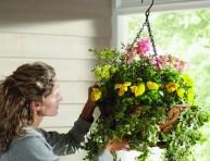 imagen Consejos para el cultivo de anuales en cesta colgante