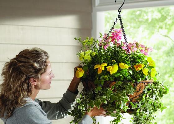 Plantar anuales en cestas colgantes
