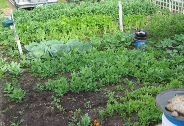 Hierbas aromáticas y hortalizas