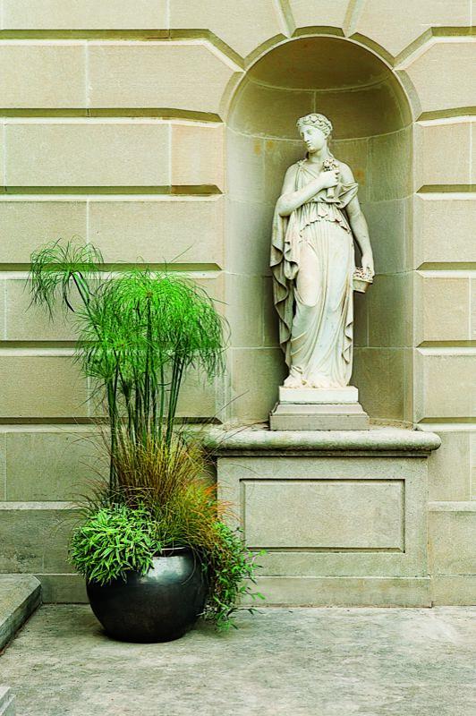 Hierbas ornamentales en maceta 2