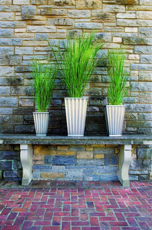 Hierbas ornamentales en maceta 3
