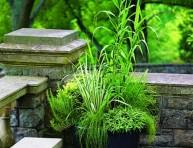 imagen Hierbas ornamentales cultivadas en maceta