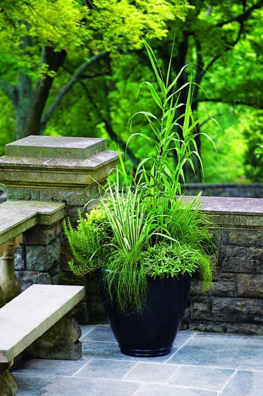 Hierbas ornamentales en maceta 4