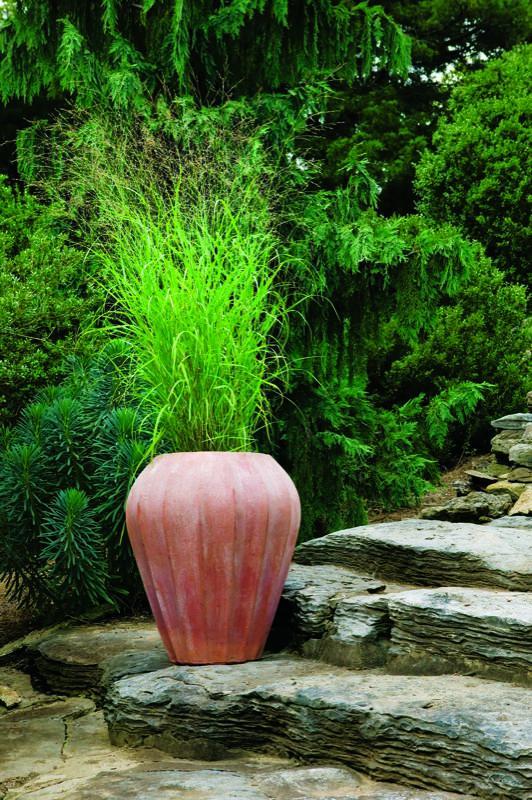 Hierbas ornamentales en maceta 6