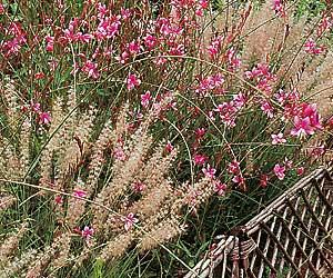 Siembra de flores de verano 2