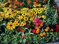 imagen La siembra tardía de flores de verano