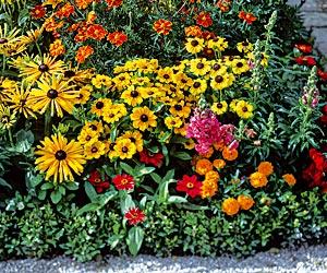 Siembra de flores de verano 3