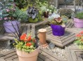 imagen Macetas floridas todo el año