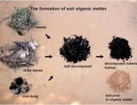 imagen ¿Que es la materia orgánica?
