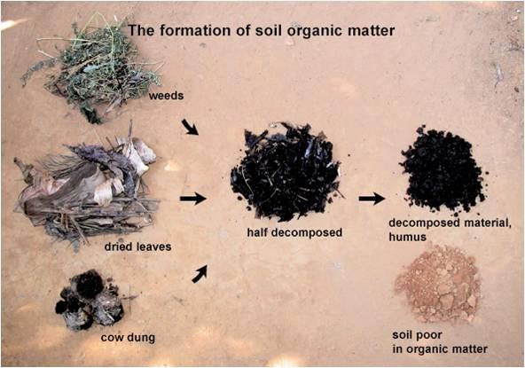 Qué es la materia orgánica 1