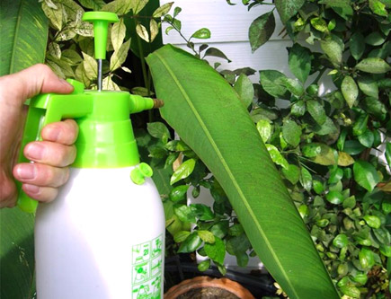 Pesticida casero 1