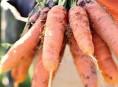 imagen Un sencillo truco para sembrar semillas pequeñas
