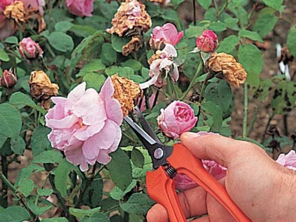 Quitar las flores marchitas 3