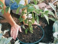 imagen Limitar la expansión de plantas invasivas