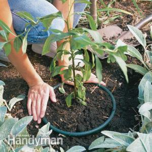 Limitar la expansión de las plantas invasivas 1