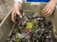 imagen Cómo preparar compost de lombriz