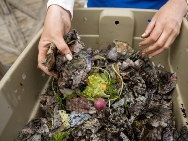 Compost de lombriz 11