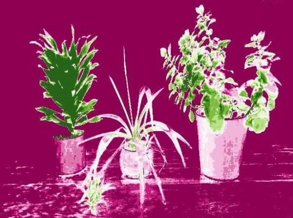 herrramientas-futuristas-para-el-jardin-09