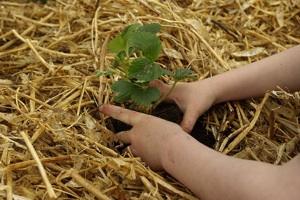 Jardinería para niños1