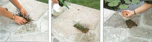 Cultivar plantas entre piedras 2