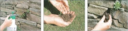 Cultivar plantas entre piedras 4