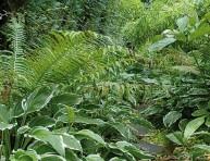imagen Plantas para lugares sombreados